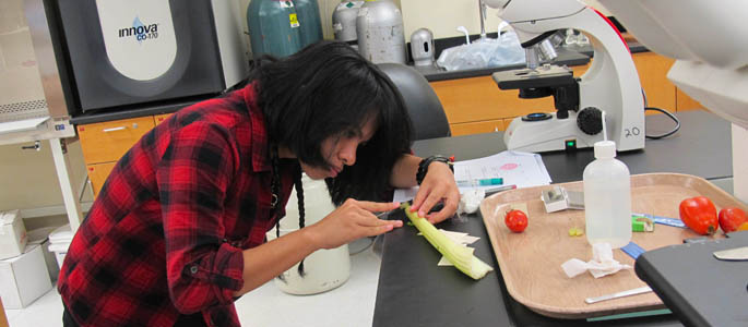Pictured is a Point Park natural sciences student doing botany lab work. | Photo by Amanda Dabbs